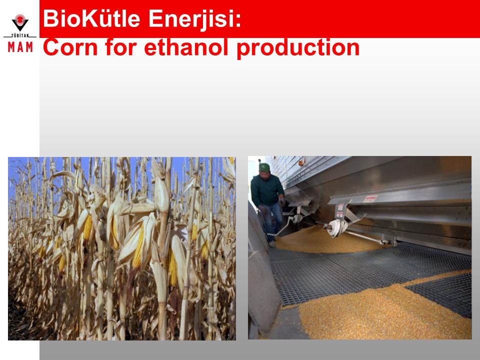 BioKütle Enerjisi: Corn for ethanol production