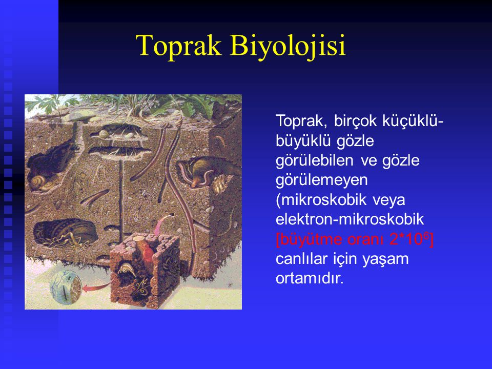 Toprak Biyolojisi