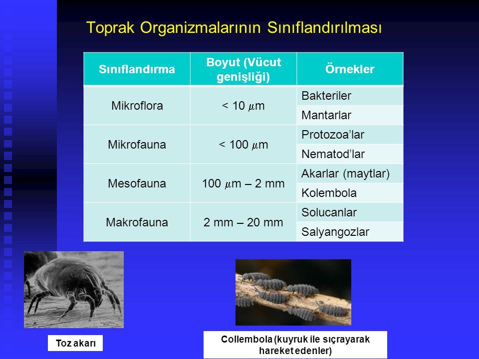 Toprak Organizmalarının Sınıflandırılması