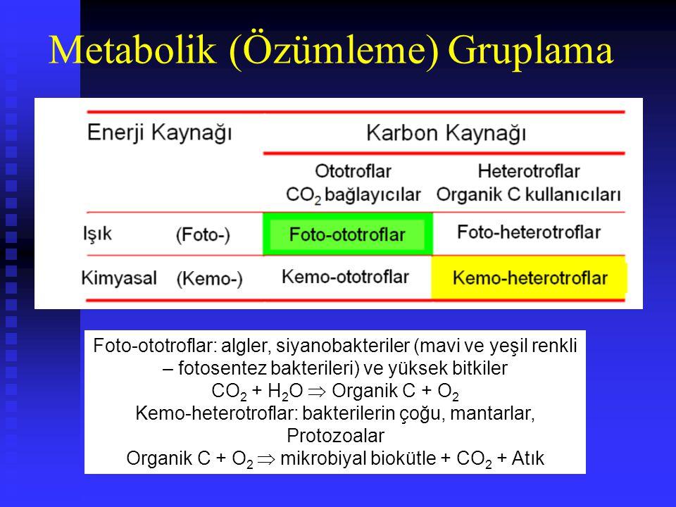 Metabolik (Özümleme) Gruplama