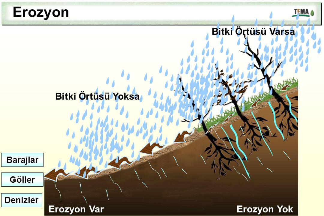 Erozyon Bitki Örtüsü Varsa Bitki Örtüsü Yoksa Erozyon Var Erozyon Yok