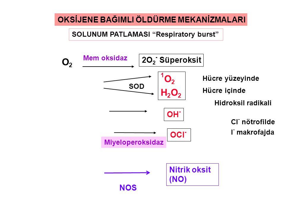 O2 1O2 H2O2 OKSİJENE BAĞIMLI ÖLDÜRME MEKANİZMALARI 2O2- Süperoksit OH-