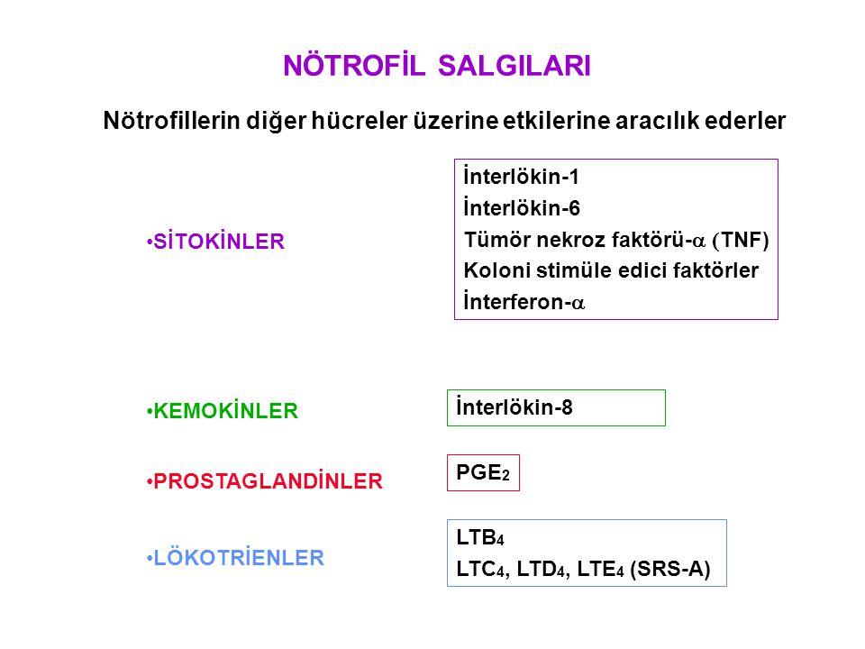 NÖTROFİL SALGILARI Nötrofillerin diğer hücreler üzerine etkilerine aracılık ederler. İnterlökin-1.