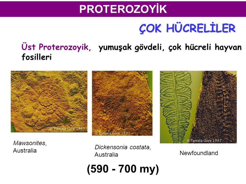 PROTEROZOYİK ÇOK HÜCRELİLER (590 - 700 my)