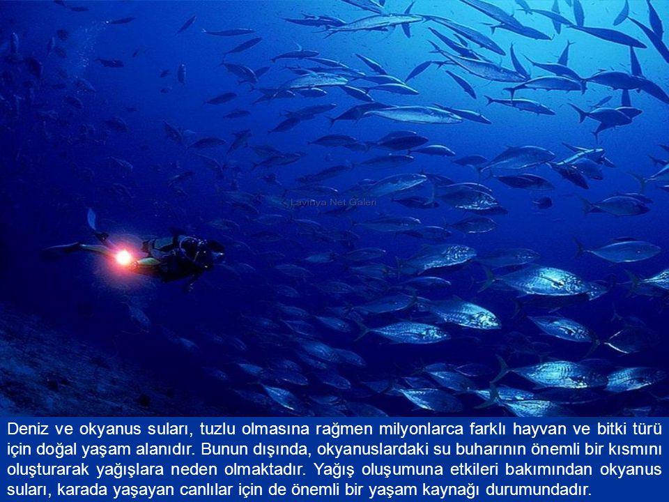 Deniz ve okyanus suları, tuzlu olmasına rağmen milyonlarca farklı hayvan ve bitki türü için doğal yaşam alanıdır.