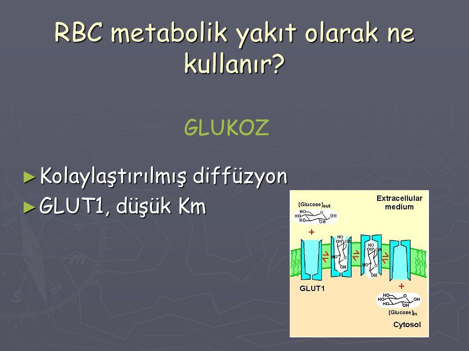 RBC metabolik yakıt olarak ne kullanır