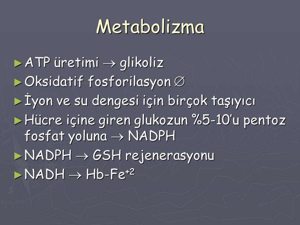 Metabolizma ATP üretimi  glikoliz Oksidatif fosforilasyon 