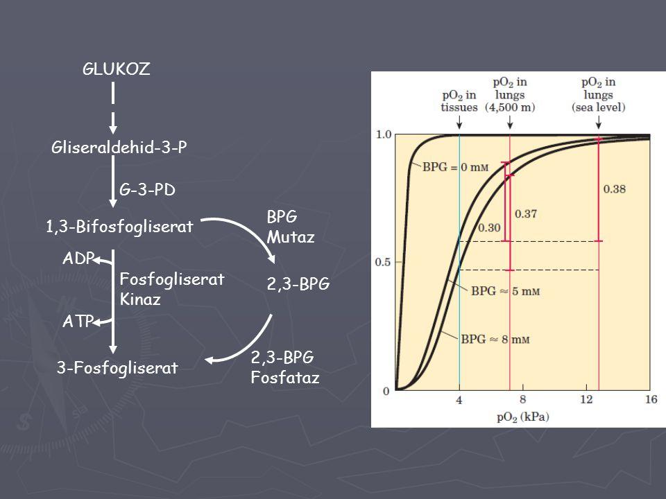 GLUKOZ Gliseraldehid-3-P. G-3-PD. BPG. Mutaz. 1,3-Bifosfogliserat. ADP. Fosfogliserat. Kinaz.