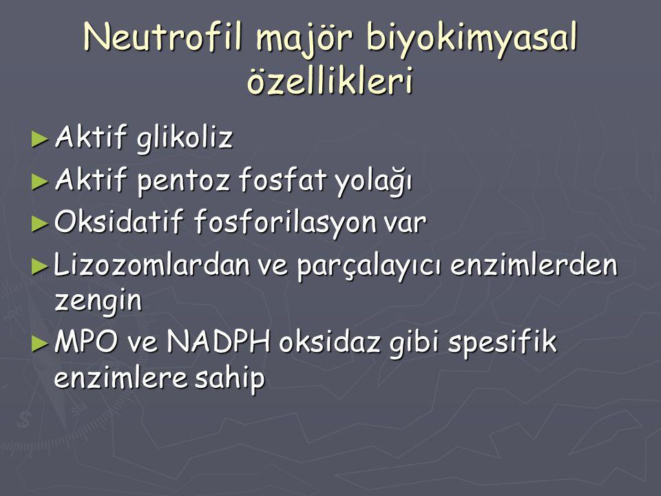 Neutrofil majör biyokimyasal özellikleri
