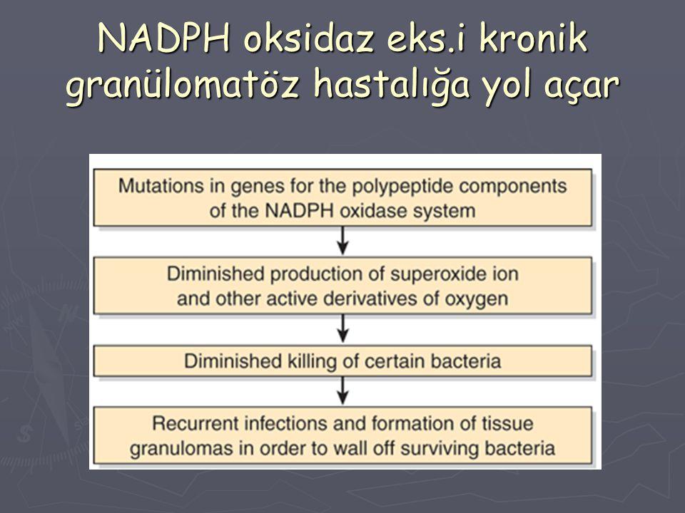 NADPH oksidaz eks.i kronik granülomatöz hastalığa yol açar