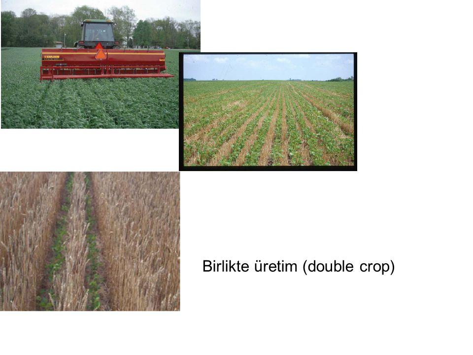 Birlikte üretim (double crop)
