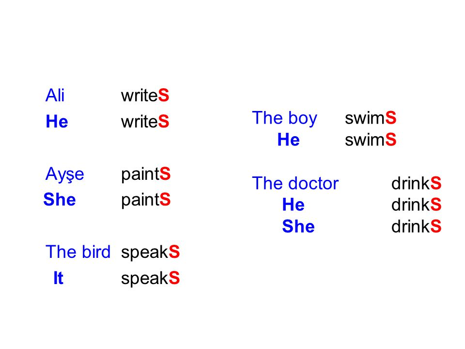 Ali writeS He writeS. Ayşe paintS. She paintS. The bird speakS. It speakS. The boy swimS.
