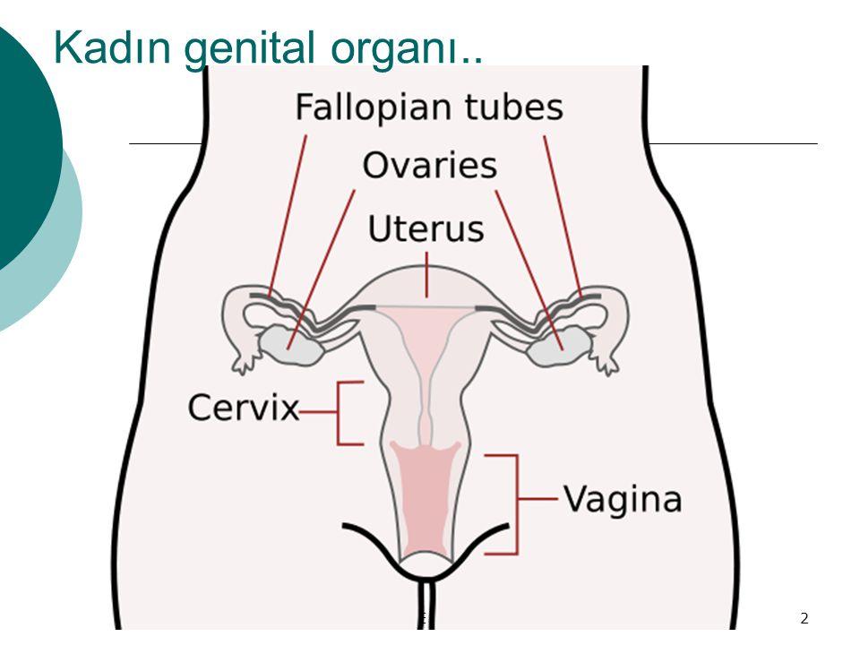 Kadın genital organı.. NİĞDE KETEM