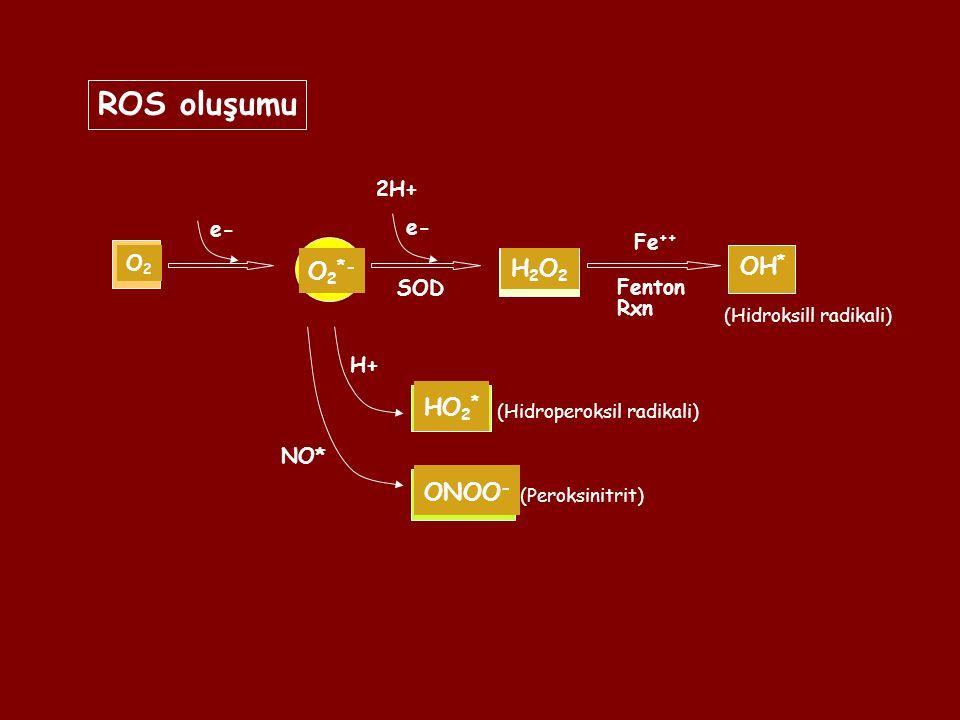ROS oluşumu H2O2 OH* O2*- HO2* ONOO- 2H+ e- e- Fe++ O2 SOD Fenton Rxn
