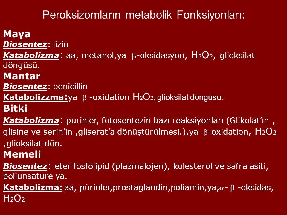 Peroksizomların metabolik Fonksiyonları: