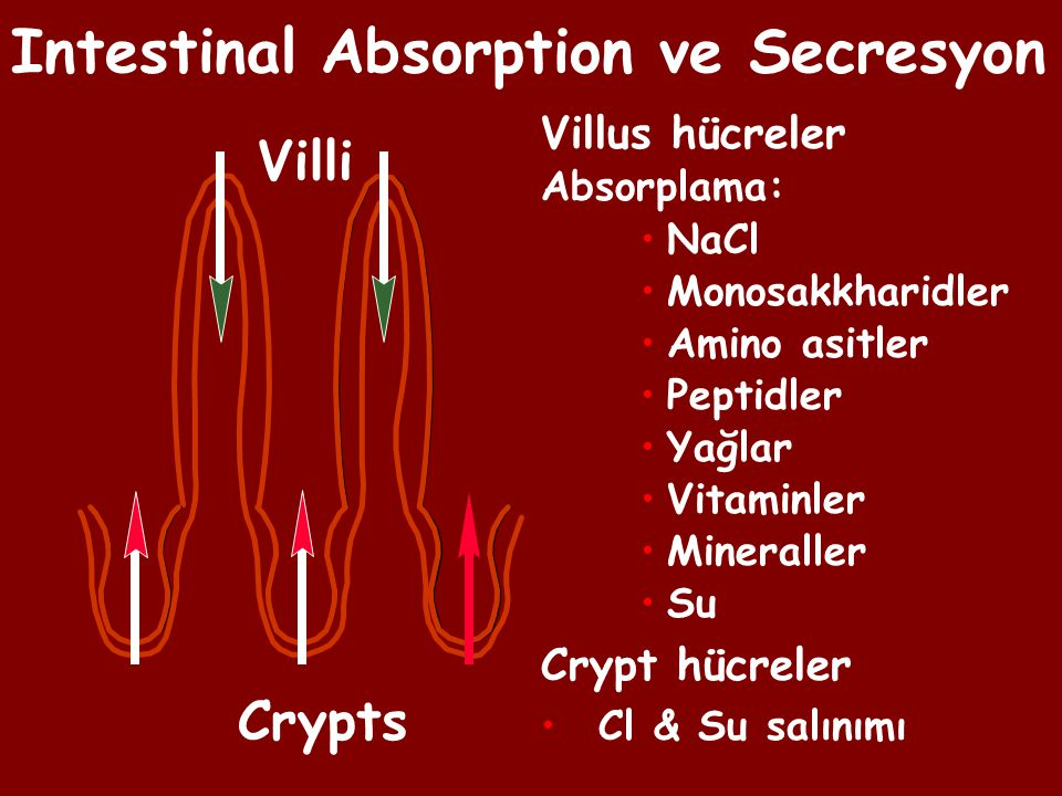Intestinal Absorption ve Secresyon