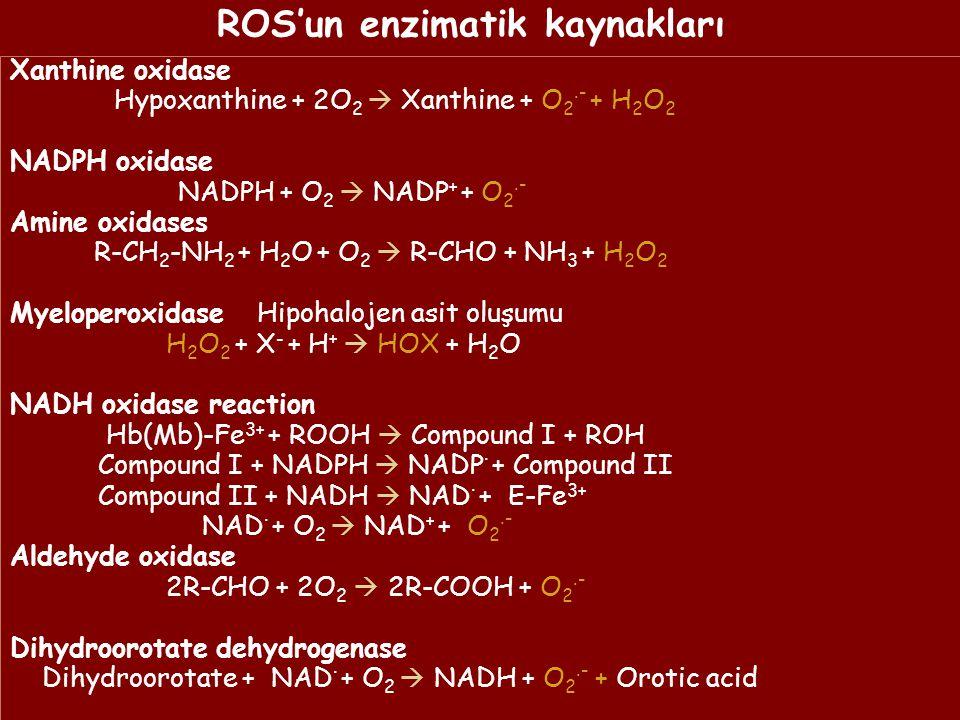 ROS'un enzimatik kaynakları