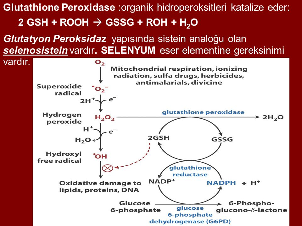 Glutathione Peroxidase :organik hidroperoksitleri katalize eder: