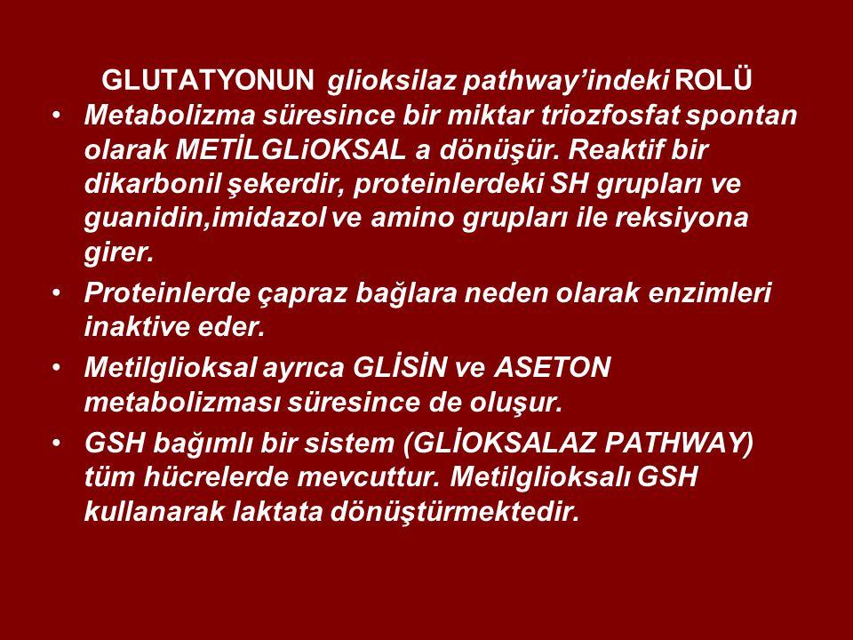 GLUTATYONUN glioksilaz pathway'indeki ROLÜ