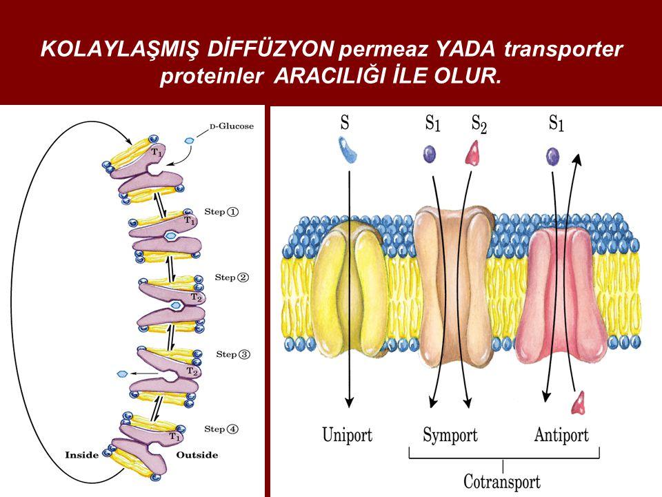 KOLAYLAŞMIŞ DİFFÜZYON permeaz YADA transporter proteinler ARACILIĞI İLE OLUR.