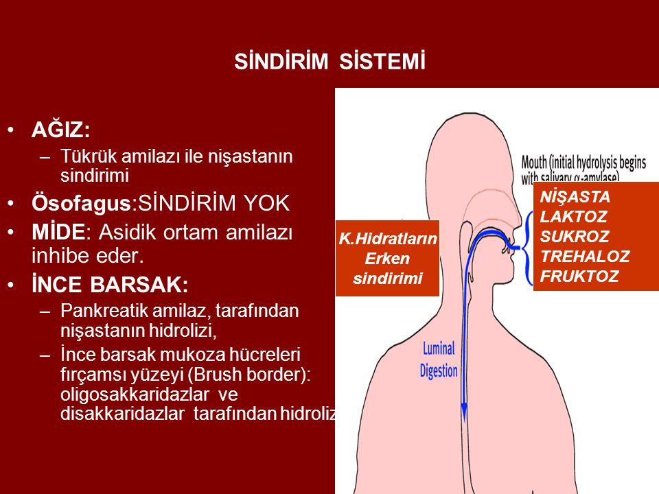 Ösofagus:SİNDİRİM YOK MİDE: Asidik ortam amilazı inhibe eder.