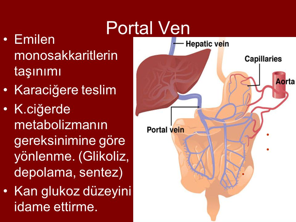 Portal Ven Emilen monosakkaritlerin taşınımı Karaciğere teslim