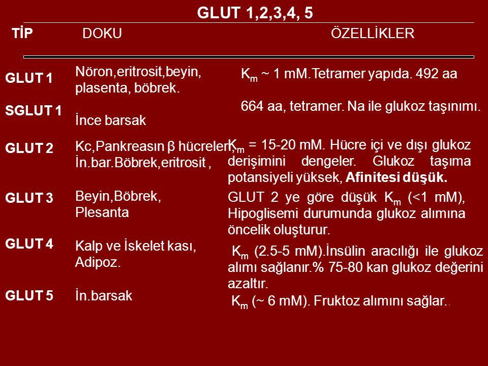 GLUT 1,2,3,4, 5 TİP DOKU ÖZELLİKLER Nöron,eritrosit,beyin,