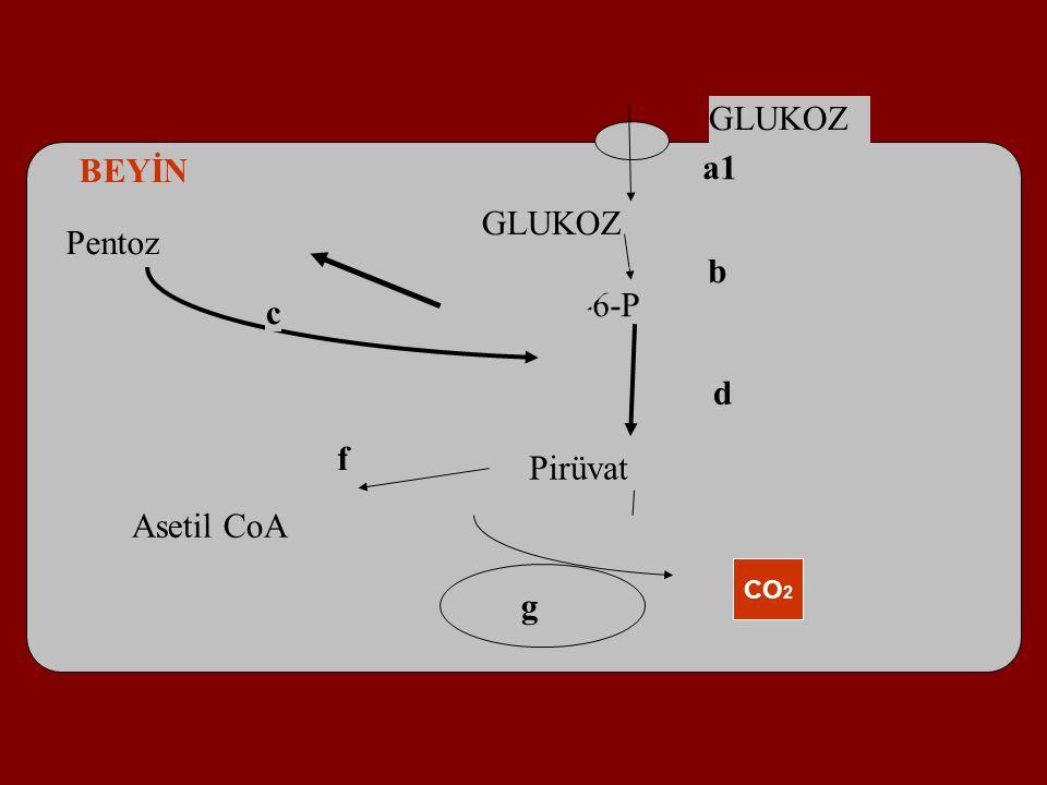 BEYİN a1 GLUKOZ Pentoz b Glucose-6-P c d f Pirüvat Asetil CoA CO2 g