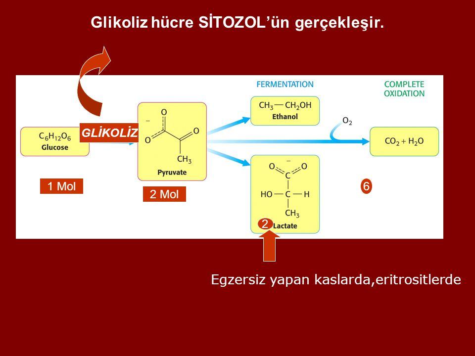 Glikoliz hücre SİTOZOL'ün gerçekleşir.