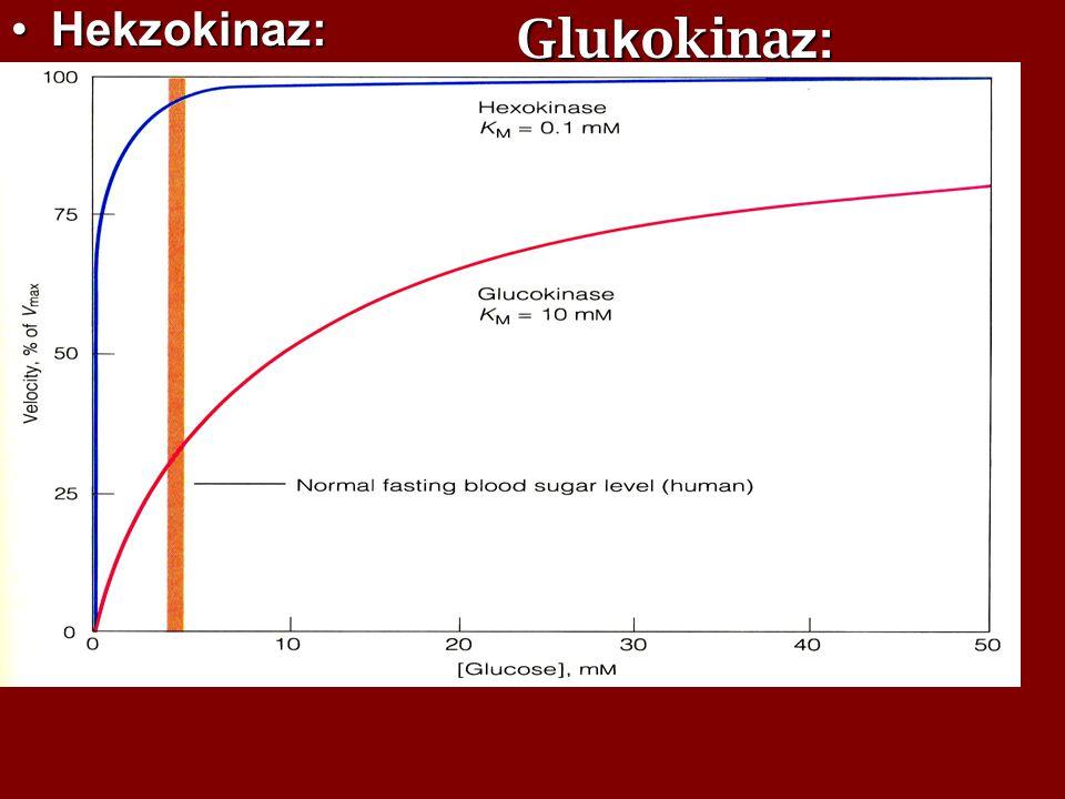 Glukokinaz:  Karaciğerde bulunur. Hekzokinaz:
