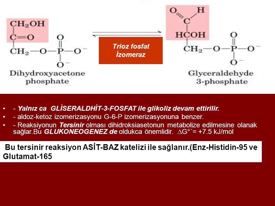 Trioz fosfat İzomeraz. - Yalnız ca GLİSERALDHİT-3-FOSFAT ile glikoliz devam ettirilir. - aldoz-ketoz izomerizasyonu G-6-P izomerizasyonuna benzer.