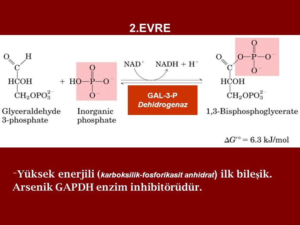 -Yüksek enerjili (karboksilik-fosforikasit anhidrat) ilk bileşik.
