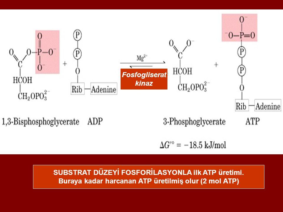SUBSTRAT DÜZEYİ FOSFORİLASYONLA ilk ATP üretimi.