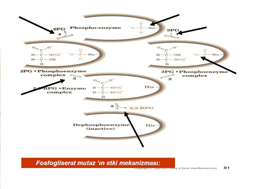 Fosfogliserat mutaz 'ın etki mekanizması: