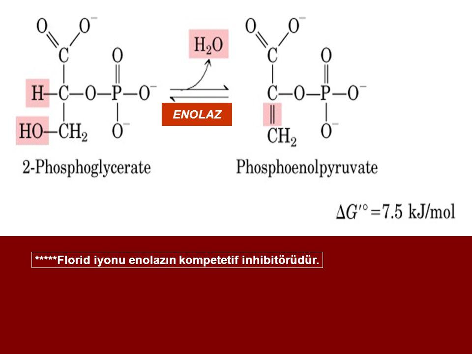 *****Florid iyonu enolazın kompetetif inhibitörüdür.