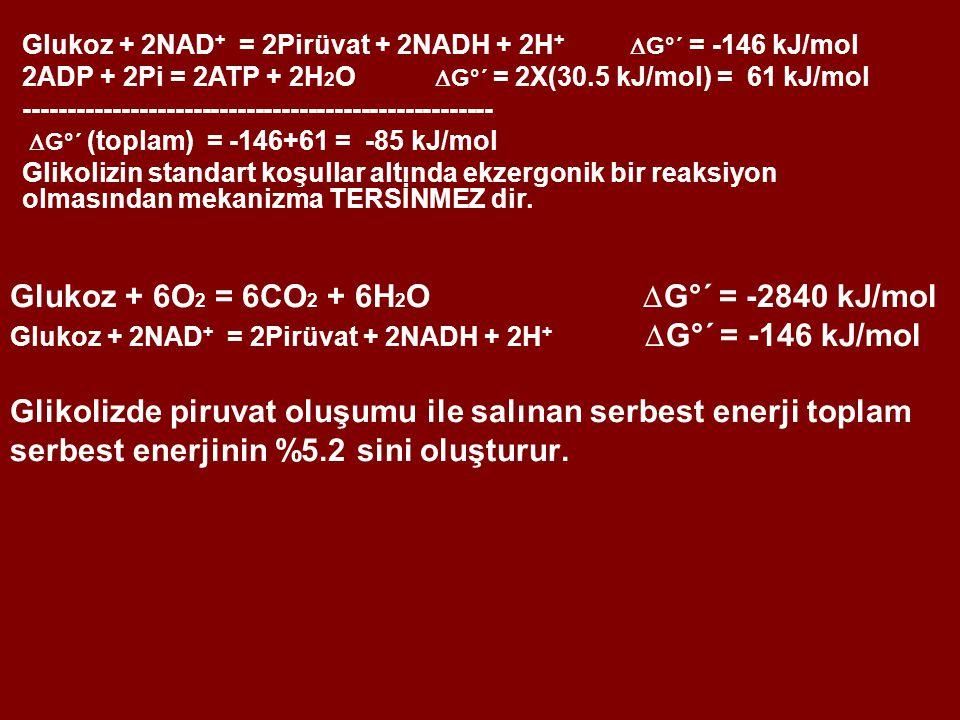 Glukoz + 2NAD+ = 2Pirüvat + 2NADH + 2H+  G°´ = -146 kJ/mol