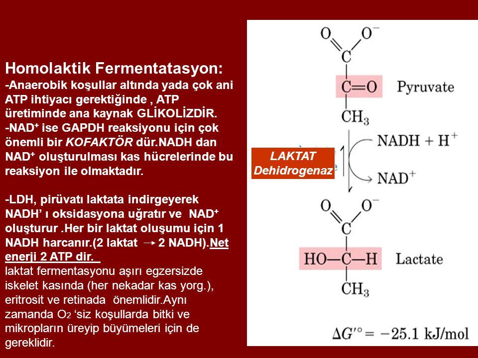 Homolaktik Fermentatasyon:
