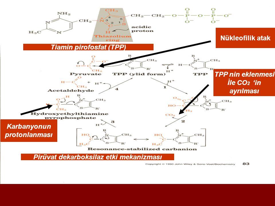 Tiamin pirofosfat (TPP) Pirüvat dekarboksilaz etki mekanizması
