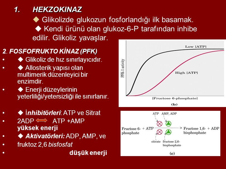 HEKZOKINAZ  Glikolizde glukozun fosforlandığı ilk basamak