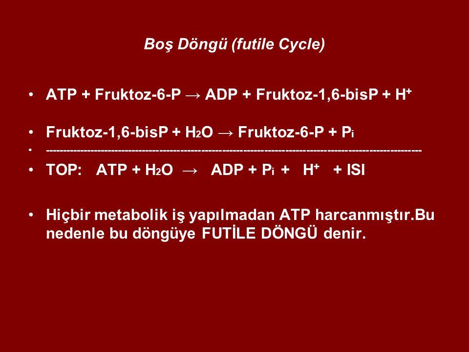 Boş Döngü (futile Cycle)