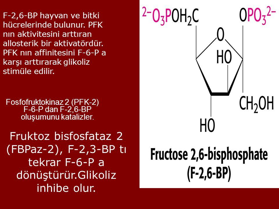 Fosfofruktokinaz 2 (PFK-2) F-6-P dan F-2,6-BP oluşumunu katalizler.
