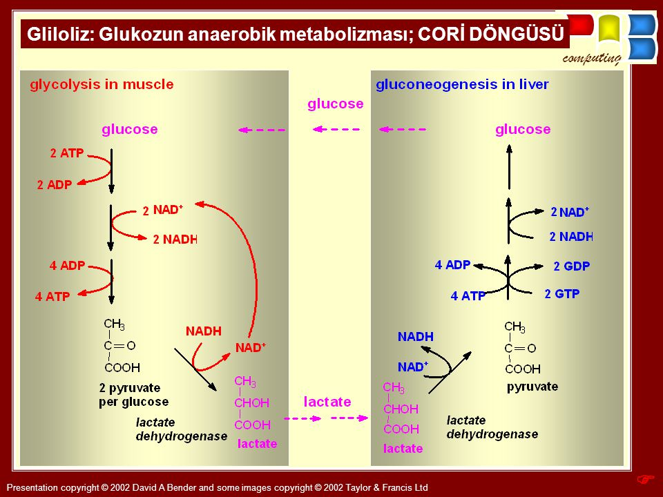 Anaerobic glycolysis 