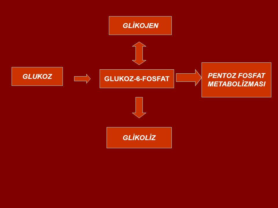 GLİKOJEN PENTOZ FOSFAT METABOLİZMASI GLUKOZ GLUKOZ-6-FOSFAT GLİKOLİZ