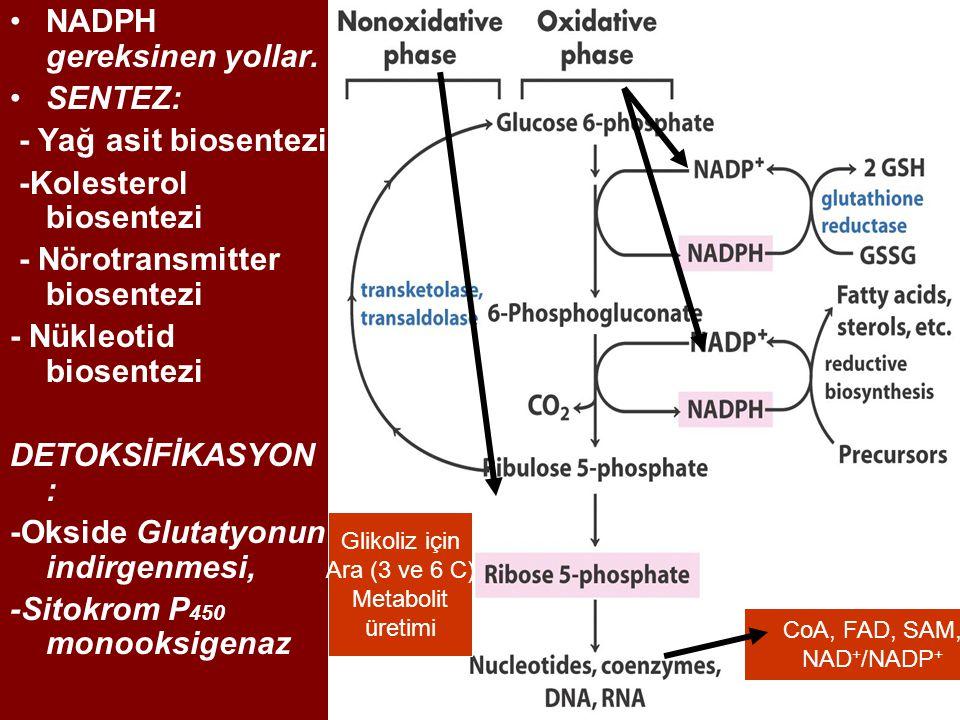 NADPH gereksinen yollar. SENTEZ: - Yağ asit biosentezi