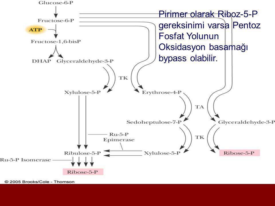 Pirimer olarak Riboz-5-P gereksinimi varsa Pentoz Fosfat Yolunun Oksidasyon basamağı bypass olabilir.