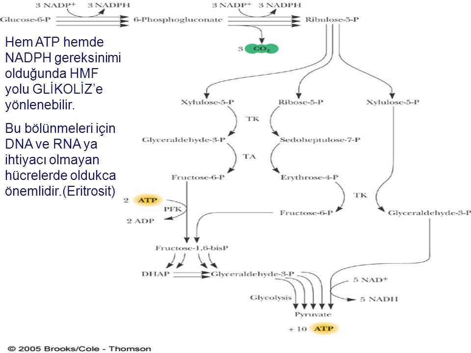Hem ATP hemde NADPH gereksinimi olduğunda HMF yolu GLİKOLİZ'e yönlenebilir.