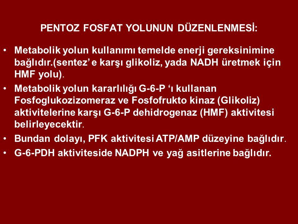 PENTOZ FOSFAT YOLUNUN DÜZENLENMESİ: