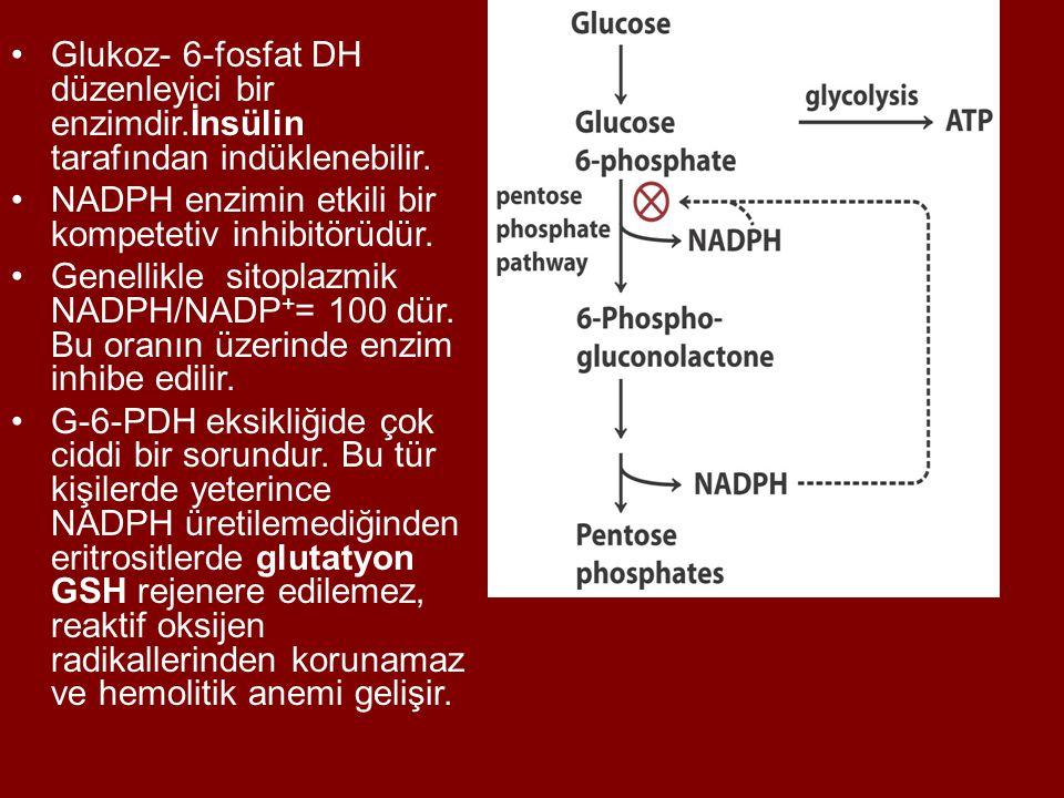 Glukoz- 6-fosfat DH düzenleyici bir enzimdir