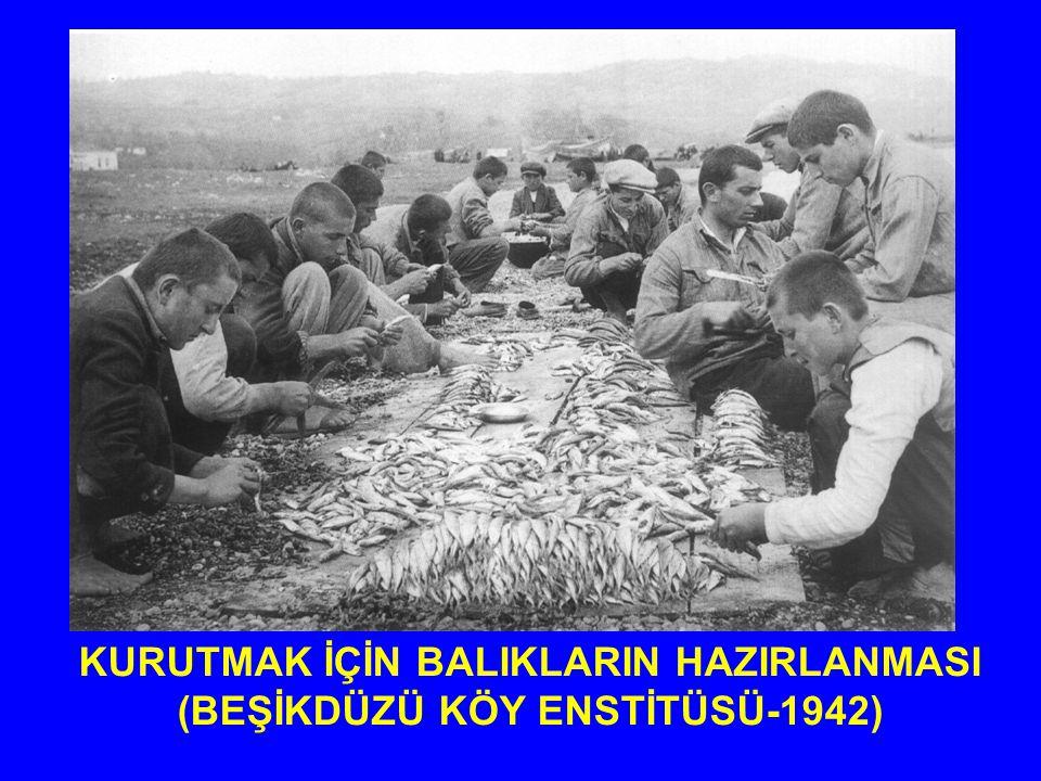 KURUTMAK İÇİN BALIKLARIN HAZIRLANMASI (BEŞİKDÜZÜ KÖY ENSTİTÜSÜ-1942)