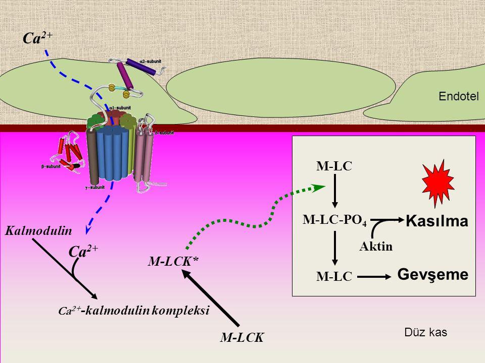 Ca2+-kalmodulin kompleksi